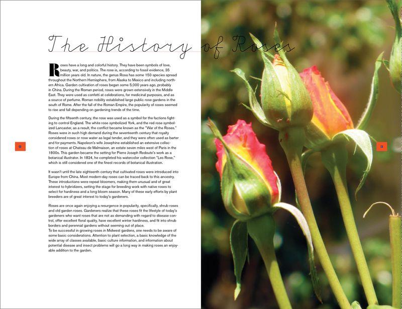 Rose Poems6
