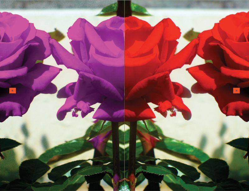 Rose Poems7